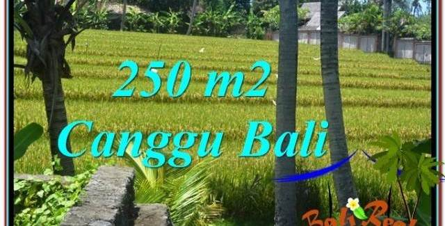 FOR SALE 250 m2 LAND IN Canggu Pererenan TJCG207