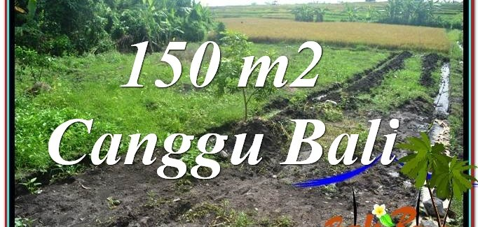 Exotic PROPERTY 150 m2 LAND IN Canggu Pererenan BALI FOR SALE TJCG213