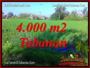 FOR SALE Magnificent 4,000 m2 LAND IN Tabanan Selemadeg BALI TJTB352