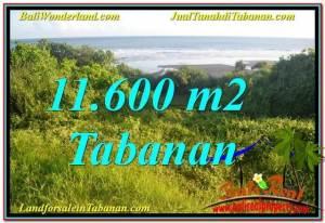 Magnificent Tabanan Selemadeg 11,600 m2 LAND FOR SALE TJTB340
