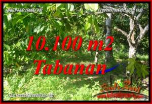 Exotic PROPERTY 10,100 m2 LAND FOR SALE IN Tabanan Selemadeg Barat BALI TJTB360