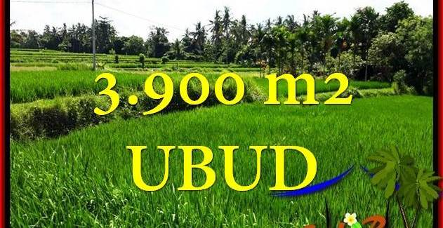 FOR SALE Beautiful 3,900 m2 LAND IN Ubud Pejeng BALI TJUB658