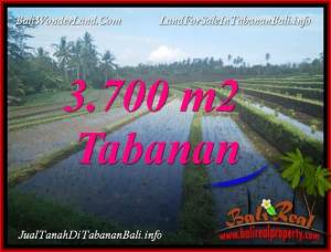 TABANAN SELEMADEG 3,700 m2 LAND FOR SALE TJTB388