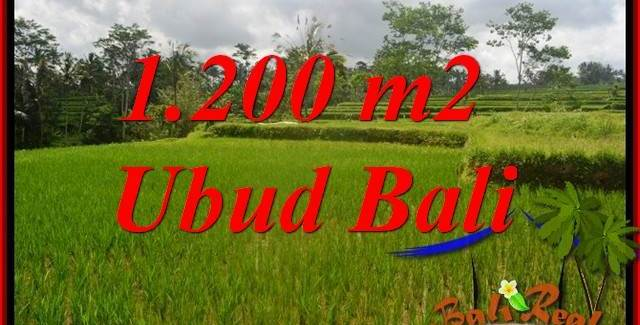 Beautiful Land for sale in Ubud TJUB693