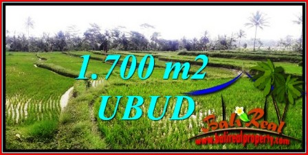 Beautiful PROPERTY Ubud Tegalalang BALI 1,700 m2 LAND FOR SALE TJUB745