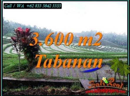 Beautiful LAND FOR SALE IN SELEMADEG TABANAN TJTB461