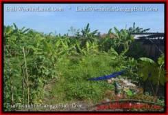 LAND IN Canggu Pererenan FOR SALE TJCG182