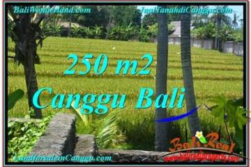 Affordable PROPERTY 250 m2 LAND IN CANGGU BALI FOR SALE TJCG207