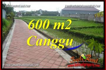 Affordable PROPERTY CANGGU 600 m2 LAND FOR SALE TJCG220