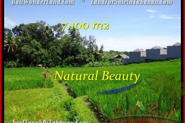 Magnificent PROPERTY 7,100 m2 LAND IN Tabanan Tanah Lot FOR SALE TJTB197