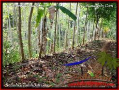 Magnificent PROPERTY Tabanan Selemadeg 6,000 m2 LAND FOR SALE TJTB221