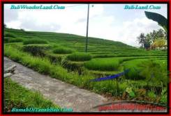 Beautiful PROPERTY 4,100 m2 LAND SALE IN Tabanan Selemadeg TJTB239