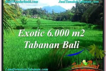 Tabanan Penebel BALI LAND FOR SALE TJTB306