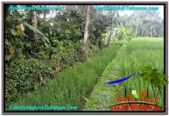 Magnificent PROPERTY 2,000 m2 LAND IN Tabanan Penebel FOR SALE TJTB303