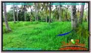 Beautiful 65,450 m2 LAND SALE IN TABANAN BALI TJTB290