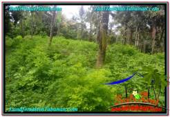 Affordable PROPERTY LAND FOR SALE IN TABANAN BALI TJTB313