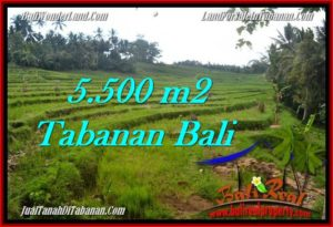 5,500 m2 LAND IN TABANAN BALI FOR SALE TJTB280