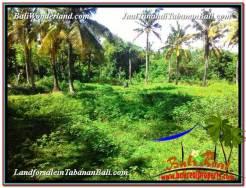 Beautiful PROPERTY LAND IN Tabanan Selemadeg BALI FOR SALE TJTB327