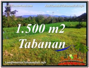 Magnificent PROPERTY 1,500 m2 LAND SALE IN Tabanan Selemadeg TJTB353