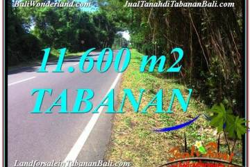 Affordable 11,600 m2 LAND SALE IN Tabanan Selemadeg BALI TJTB327
