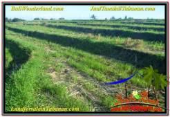 FOR SALE Exotic 17,604 m2 LAND IN Tabanan Kerambitan BALI TJTB342