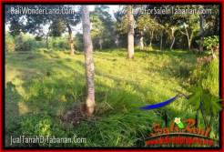 FOR SALE Exotic PROPERTY 5,200 m2 LAND IN TABANAN TJTB334