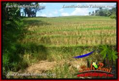 Magnificent PROPERTY 3,700 m2 LAND FOR SALE IN TABANAN BALI TJTB377
