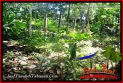 Exotic PROPERTY 4,500 m2 LAND FOR SALE IN TABANAN Selemadeg BALI TJTB380