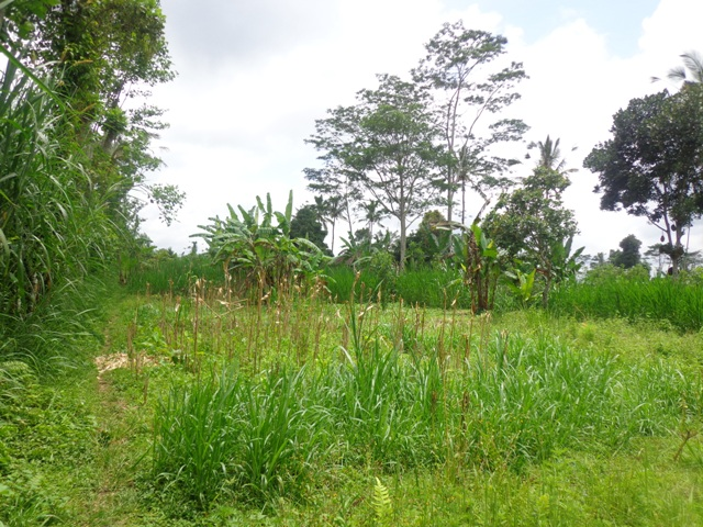 Ubud Land for sale natural view  in Ubud Tegalalang  Bali