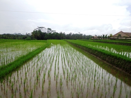 Land for sale in Ubud Bali 2,500 m2 in Ubud Tegalalang