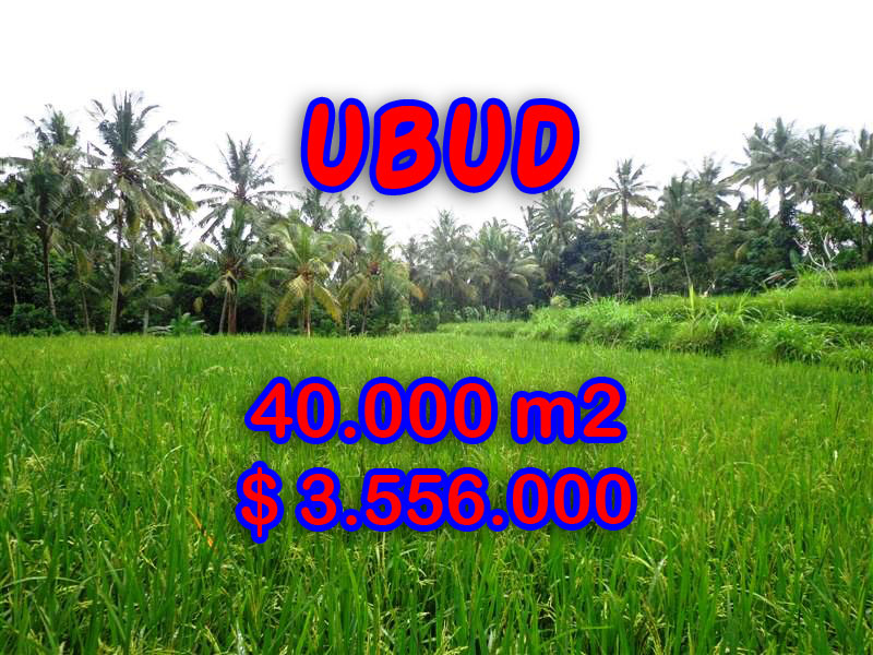 Land in Bali for sale, Eye-catching view in Ubud Bali – 40.000 sqm @ $ 89