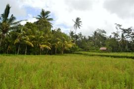 Land in Ubud Bali for sale