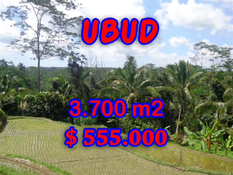 Interesting Land for sale in Ubud Bali, paddy view by the river in Ubud Tegalalang– TJUB293