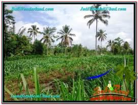 FOR SALE Magnificent 1,700 m2 LAND IN UBUD BALI TJUB560