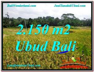 Exotic PROPERTY LAND IN Ubud Tegalalang BALI FOR SALE TJUB606