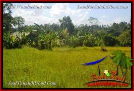 Affordable PROPERTY 4,000 m2 LAND IN Ubud Gianyar FOR SALE TJUB661
