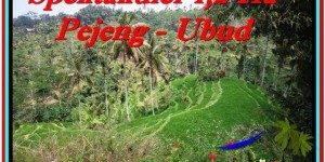 Magnificent 12,000 m2 LAND FOR SALE IN UBUD BALI TJUB520