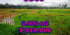 Land for sale in Bali, Beautiful view in Ubud Bali – 2.900 sqm @ $ 110