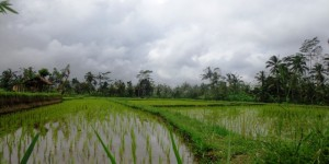 Land for sale in Ubud Natural view  in Ubud Tegalalang Bali
