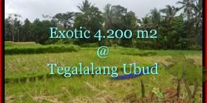Affordable PROPERTY 4,200 m2 LAND SALE IN UBUD TJUB461