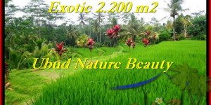 Exotic PROPERTY LAND FOR SALE IN UBUD TJUB480