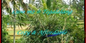 Exotic PROPERTY 1,500 m2 LAND IN UBUD BALI FOR SALE TJUB489
