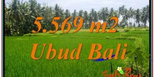 Beautiful PROPERTY 5,569 m2 LAND FOR SALE IN Sentral / Ubud Center TJUB642
