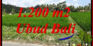 Affordable Land in Ubud for sale TJUB694