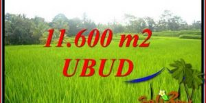 Affordable Property 11,600 m2 Land in Ubud Tegalalang for sale TJUB732
