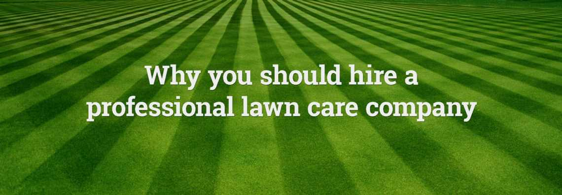 Pro Lawn Care vs Do It Yourself