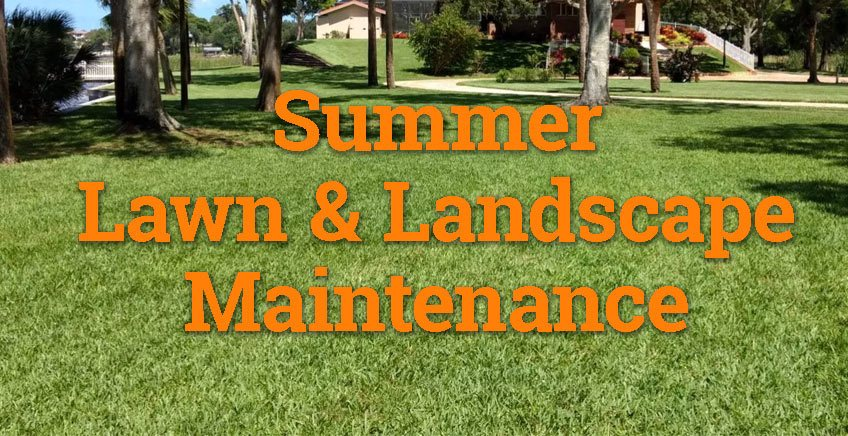 Summer Yard and Landscape Maintenance