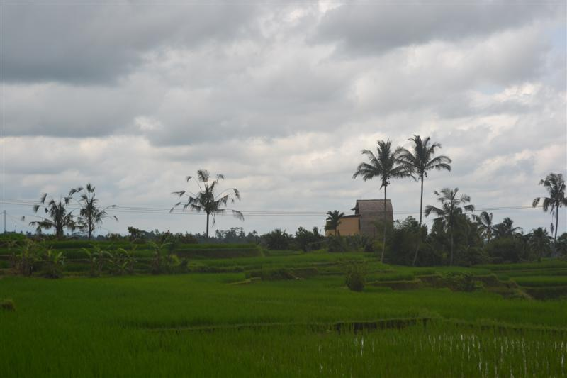 Land for sale in Tabanan Bali 3,500 m2 in Tabanan