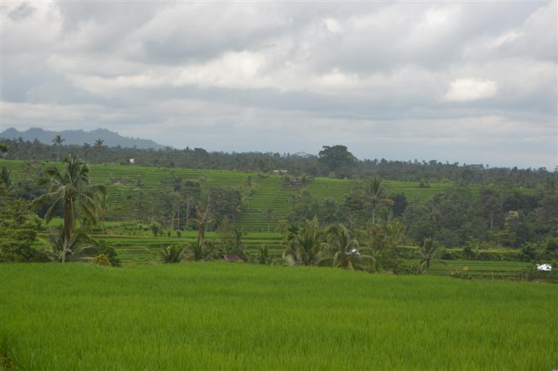 Land for sale in Tabanan montain and rice paddy view  in Tabanan Jatiluwih  Bali