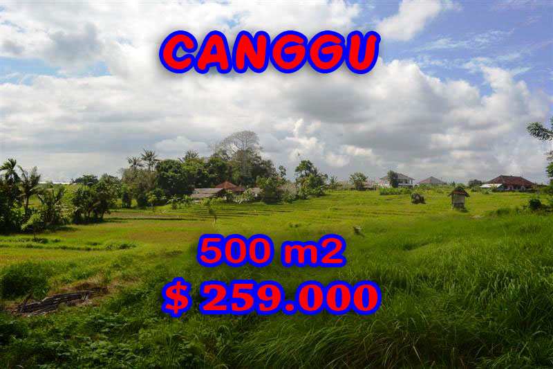 Wonderful Land for sale in Bali, Attractive rice paddy view in Canggu Batu Bolong – TJCG116